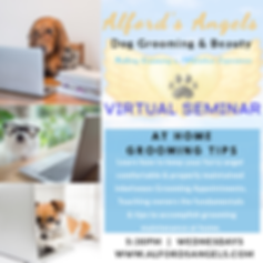Dog Grooming Seminar