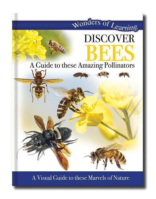 Discover Bees