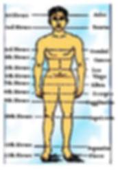 human body copy.jpg