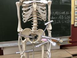 2021_01 Kl.3 Sach Skelett (1)