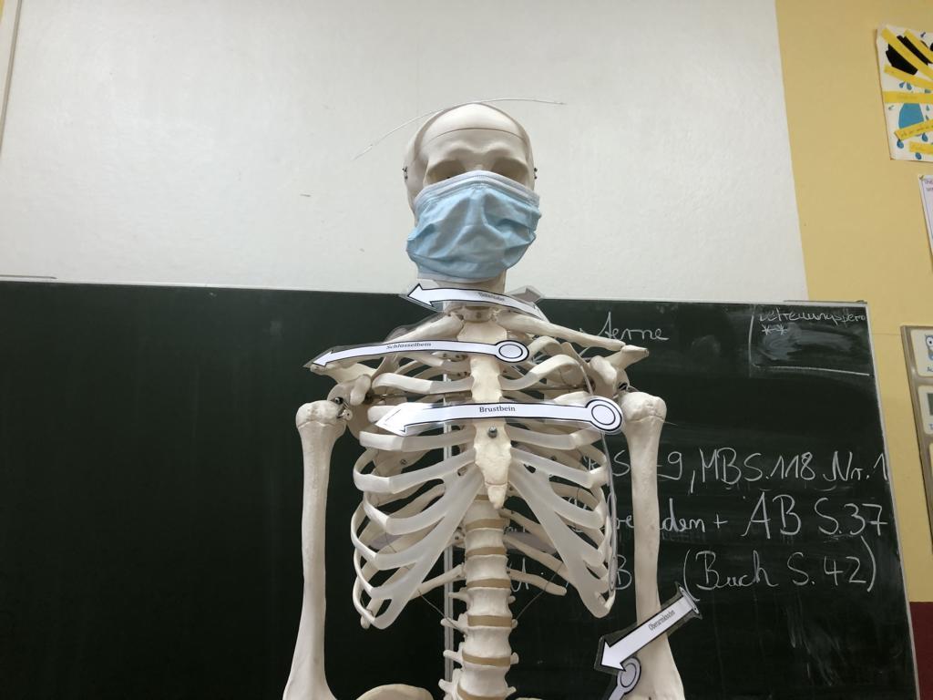 2021_01 Kl.3 Sach Skelett (6)