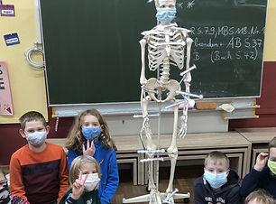 2021_01 Kl.3 Sach Skelett (2)_.jpg