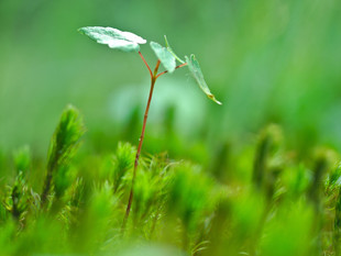 """ECONOMIC & FIXED INCOME COMMENTS - """"Green Shoots of Spring..."""""""