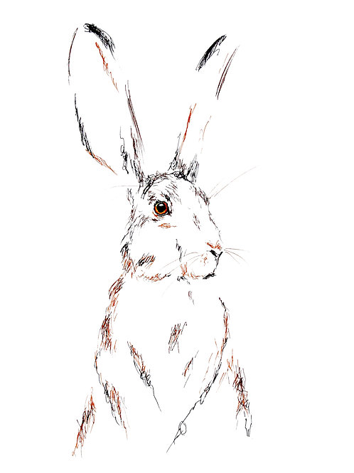 Hare Today I - A3 Print
