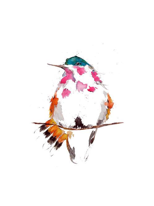 "Hummingbird 8 x 10"""