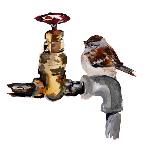 Sparrow on Tap - A3