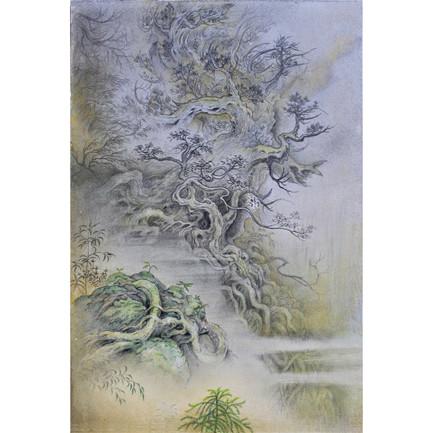 「ある日の屋久杉」