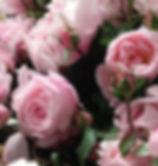 English Rose.jpg