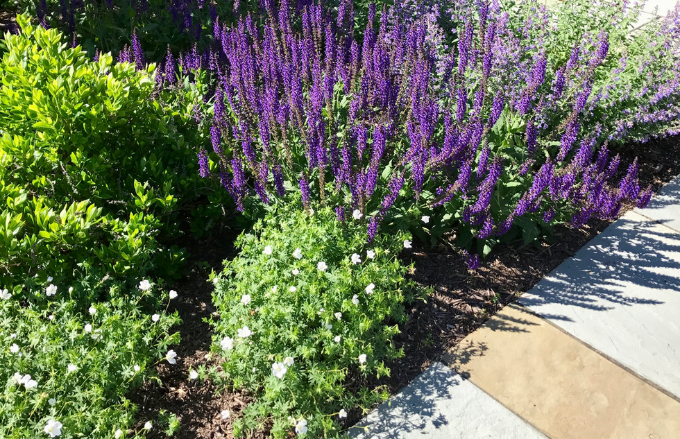 garden full of flowers and plants of varying colors philip maggi landscape and garden design