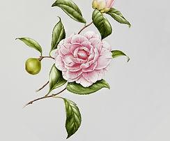 Illustrato Fiore