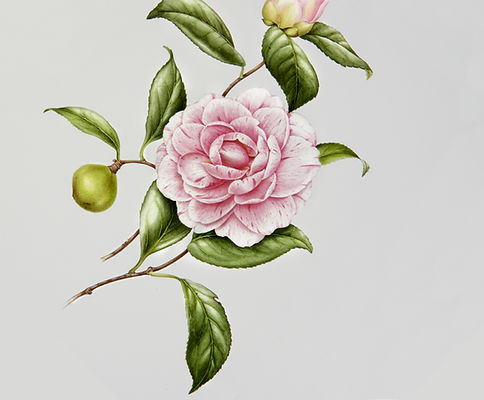 Illustrated Flower