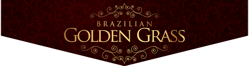 Brazilian Golden Grass
