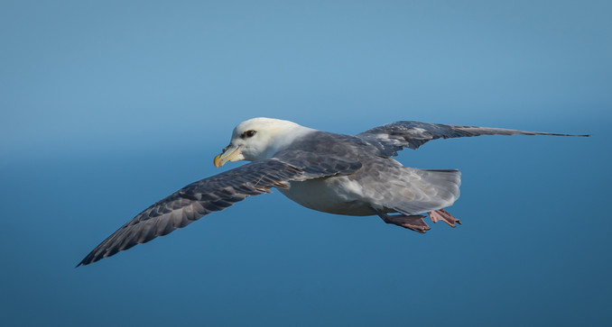 'Flying High' by Jonathan Mitchell, Fairhead Photographic Club
