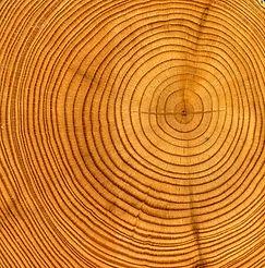 Wood%20Rings_edited.jpg