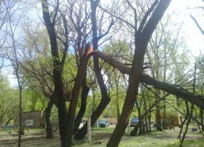 Se procedió a cortar árboles que tenían peligro de caerse en la Isla 58