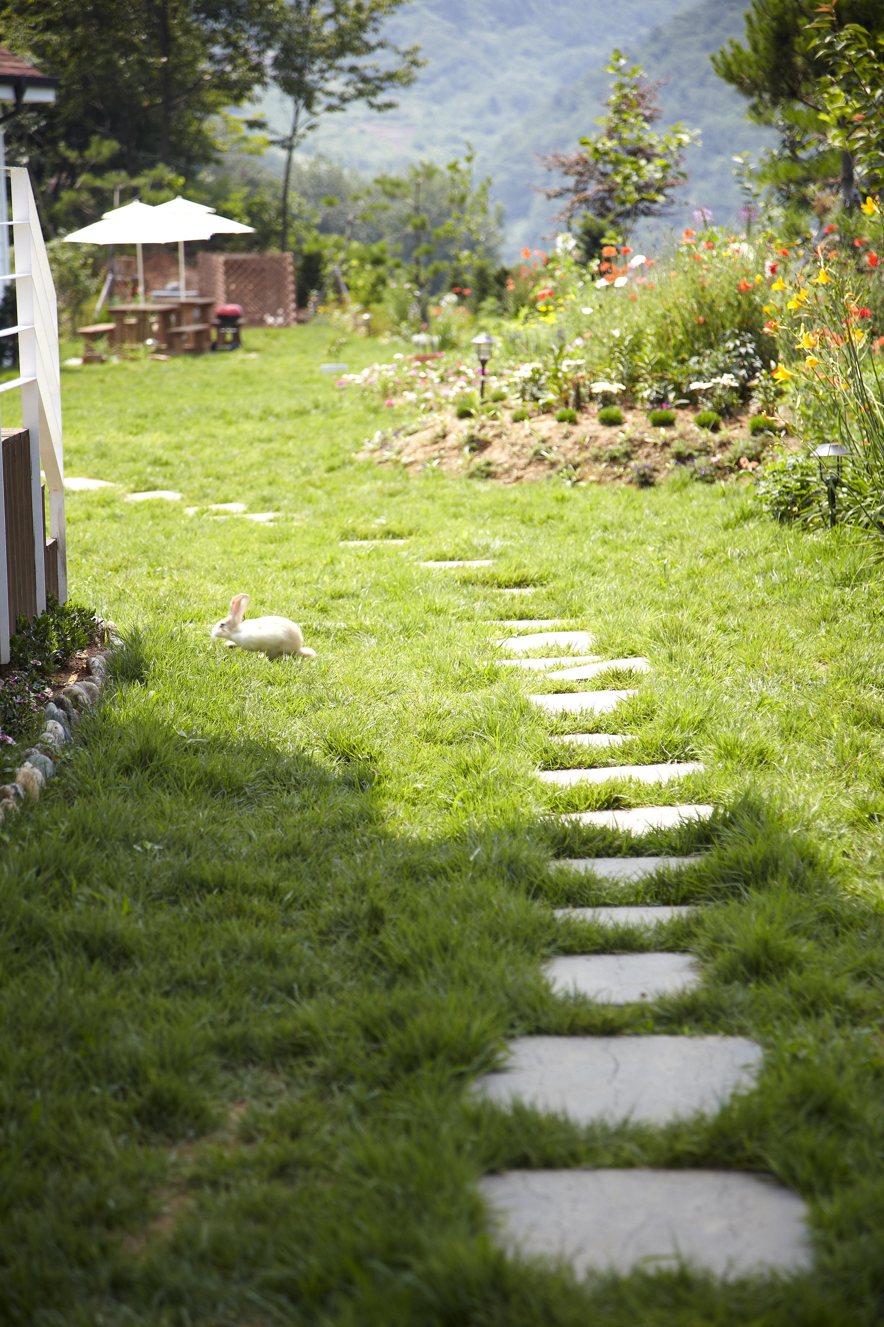 정원과 토끼