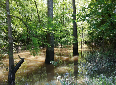 Conservation Easements in Semi-Plain English