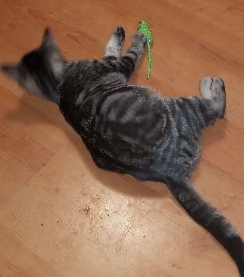 gray kitten with black stripes and mouse toy