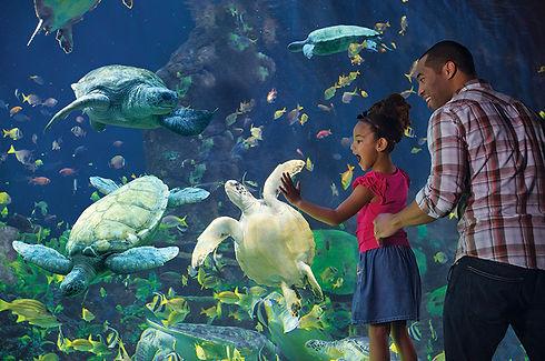 SeaWorld Main.jpeg