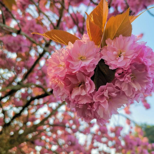Blossom © Rachel Mammone Paints