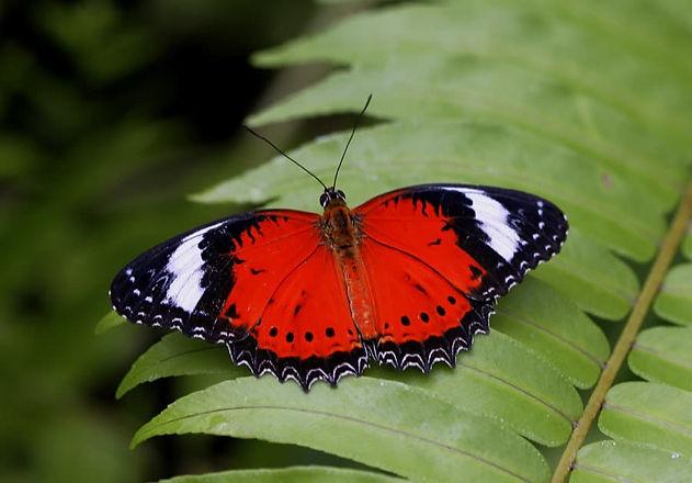 Australian-Butterfly-Sanctuary_Redder-la