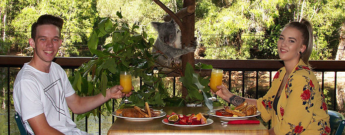 1.-Breakfast-with-the-koalas-Hartley-s-C