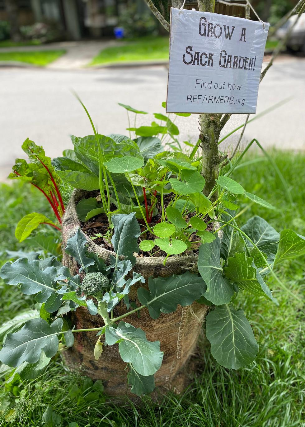 tiny garden sample on street.jpeg