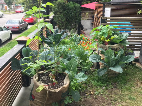 What are Tiny Gardens?