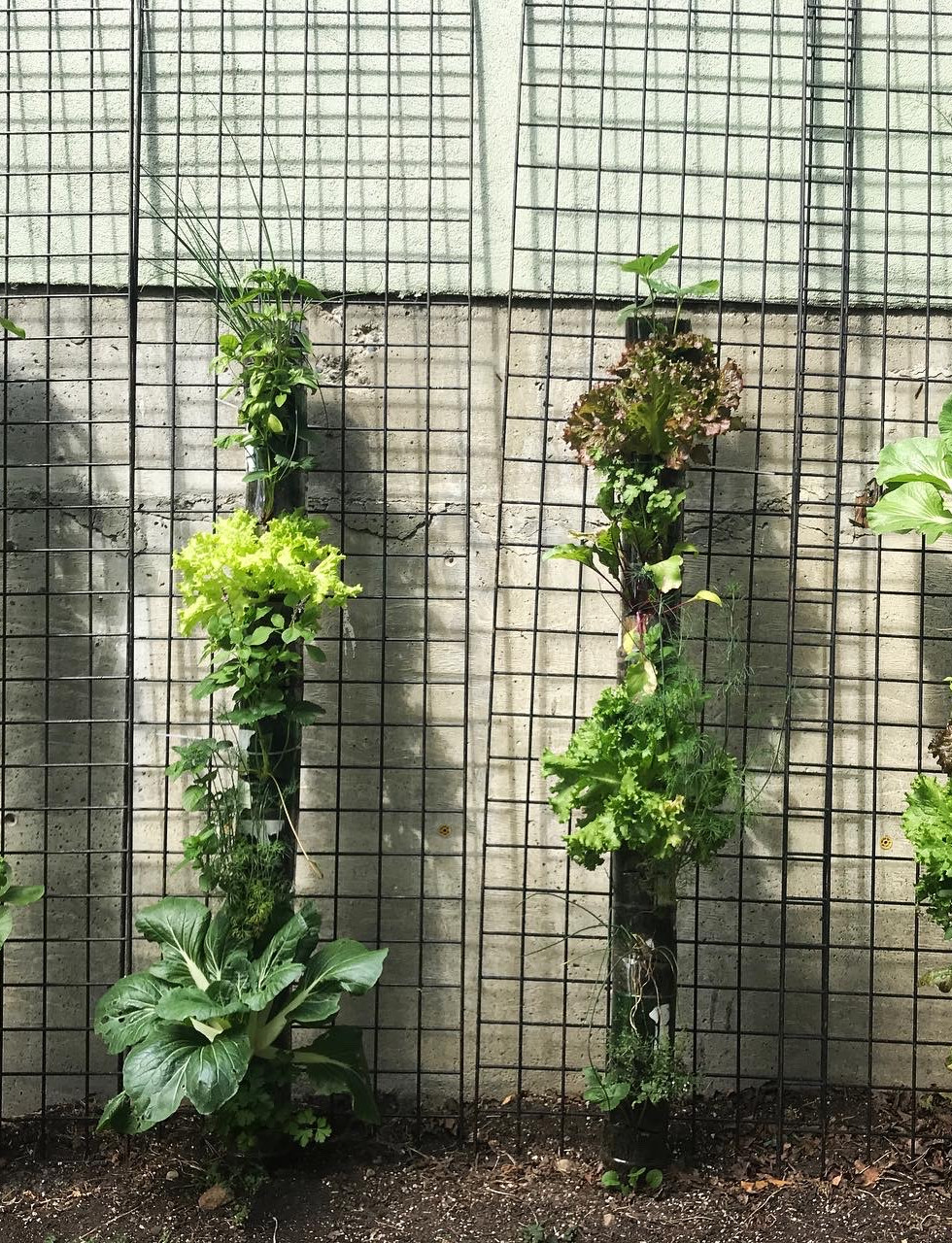 vertical tiny gardens.jpeg