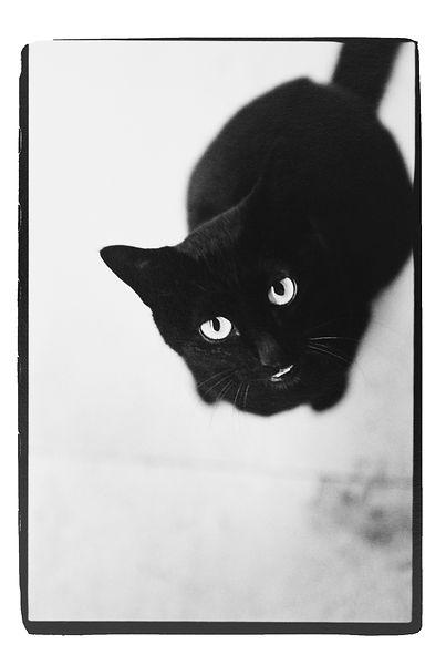 街猫.jpg