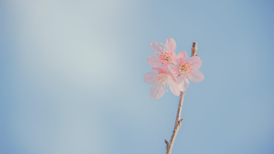 beautiful-beautiful-flowers-bloom-913416 (1).jpg