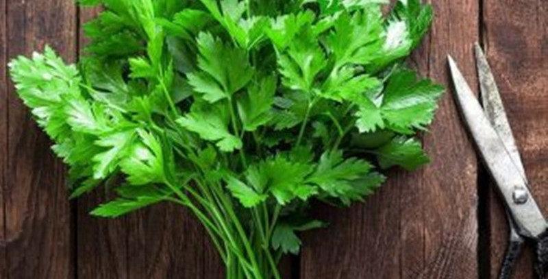Fresh flat leaf parsley (100g bunch)