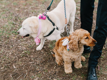 Having your dog at your Wedding