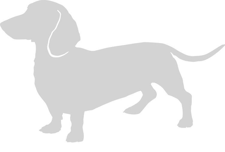 sausage-dog-1_edited.jpg