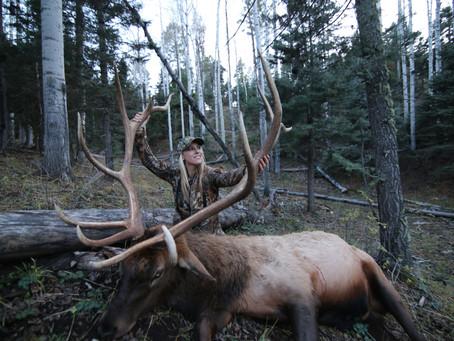 Is an Elk on your Bucket List?