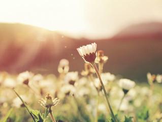 É Primavera: Renove a Esperança!