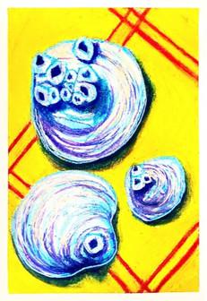 Seashells from Florida