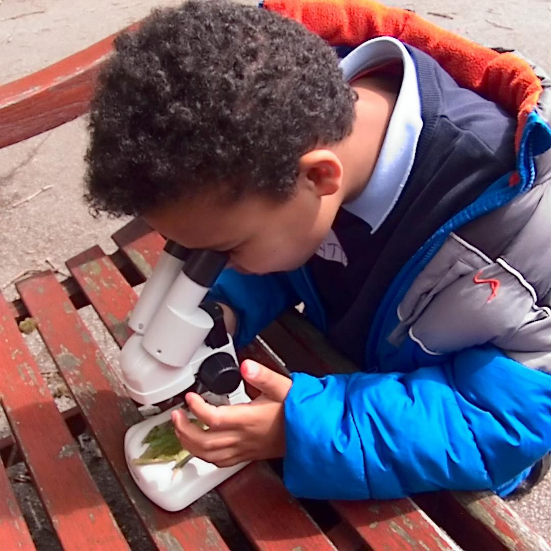 Primary Parliament microscopes 10.jpg