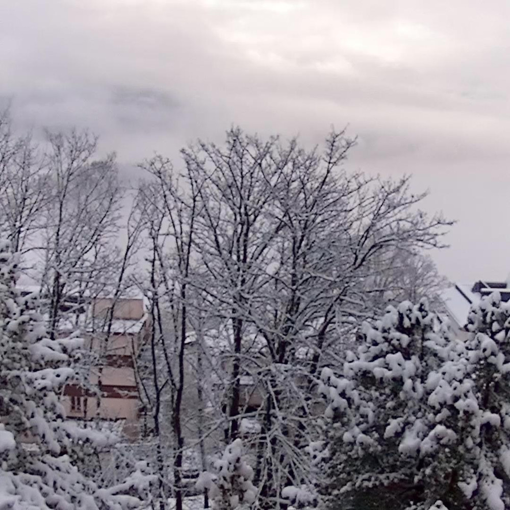 Snow on trees in Leysin