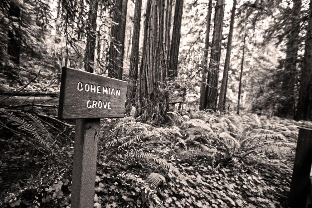 bohemian grove.jpg