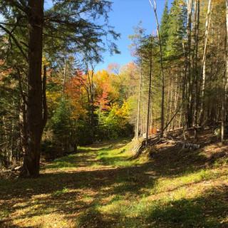 path-in-woods-600x400.jpg