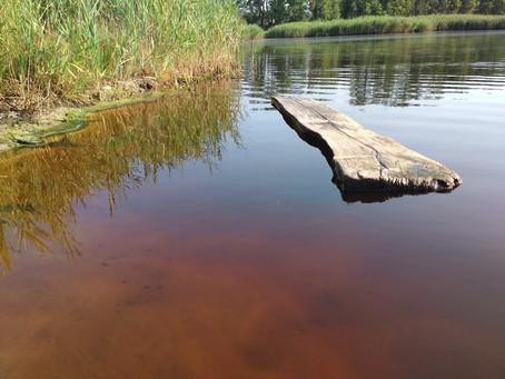 Очерет серед південного лісу, затишні йодові озера Олешшя.