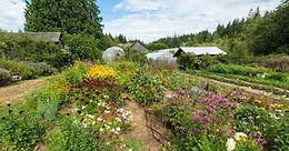 ALM Organic Farm