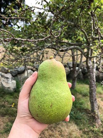 pear.jpeg