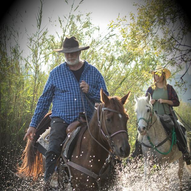 סוסים-חוות-דובי-הובלת-בקר-8204.jpg