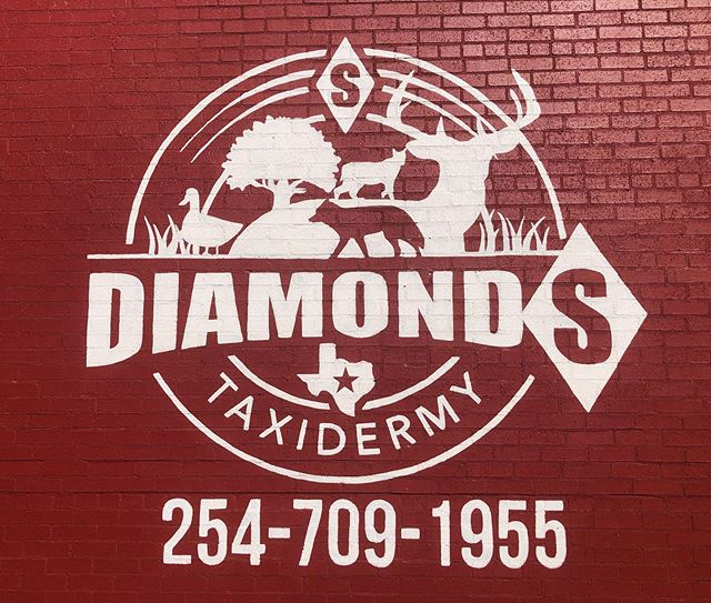 Diamond S Taxidermy