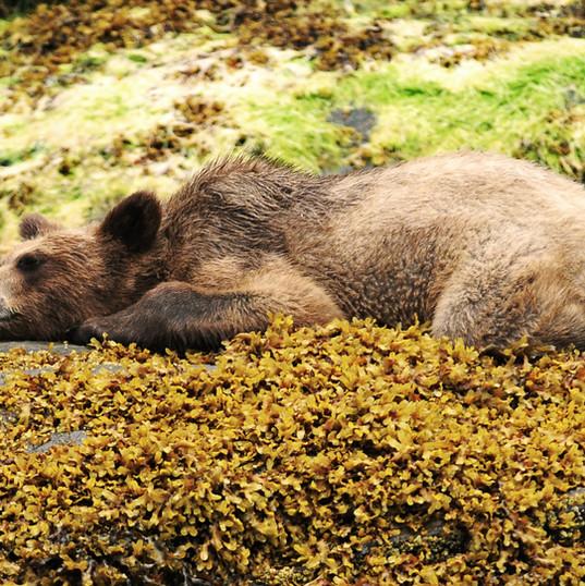 Bear Necessities_Karina Dracott.jpg