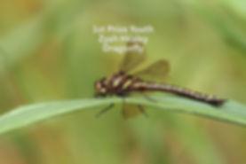 Zyah_Healey_–_A_dragonfly-YOU_copy.jpg