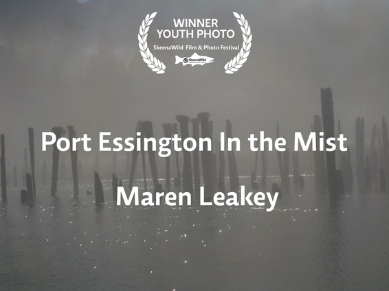 Port Essington In the Mist