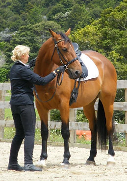 Auckland Horse Care